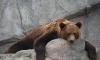Медведь, который  загрыз на Камчатке туристов, поплатился жизнью