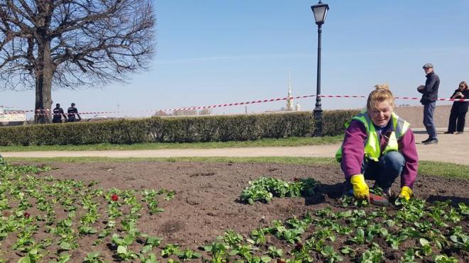Более 500 тысяч цветов украсят Петербург ко Дню Победы