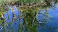 Труп в свитере и трусах выловили из реки в Ленобласти