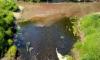 В реку Войтолово слили биологические отходы
