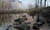 Вслед за Финским заливом вода ушла из Смоленки