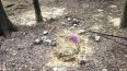 Неизвестные разгромили кладбище домашних животных ...