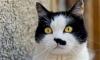 В ветеринарке убили кота
