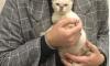 Студентка из Майкопа выплатила долг приюта в 340 000 рублей, чтобы у нее приняли котенка