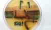"""""""Мосту глупости"""" подарили картину из микробов в честь 150-й застрявшей """"Газели"""""""