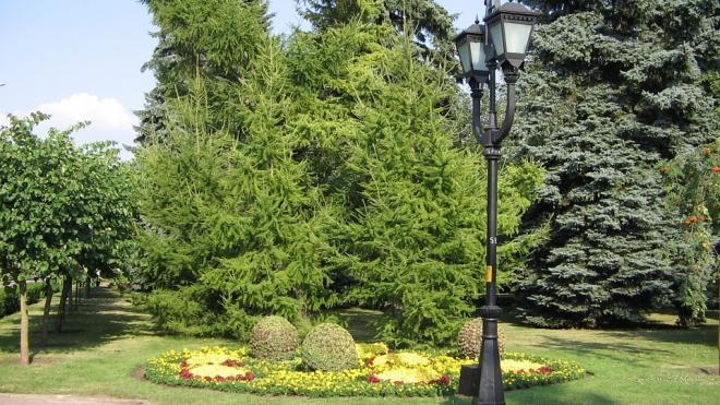 Скверы имени Образцовой и Петипа появится в Петербурге