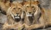 Ленинградский зоопарк подготовил специальную программу для влюбленных