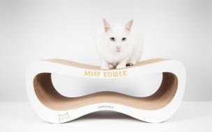 На благотворительном аукционе продадут когтеточку кота Ахилла