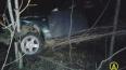 В ДТП с лосем в Ленобласти погиб водитель