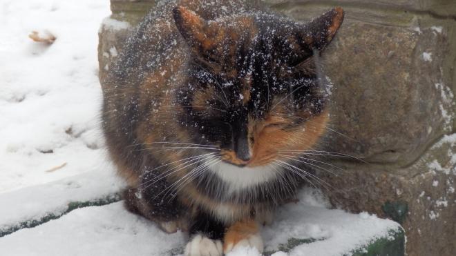В Ленобласти в воскресенье ожидается гололедица и небольшой снег