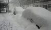 Для проверки качества уборки снега в Петербурге открыта горячая линия