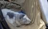 Появились фото измученных тюленят, спасенных в Петербурге