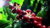 Кризис еврозоны увеличивает мировое потребление кофе