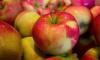 В Петербурге бульдозером раздавили санкционные яблоки из Украины