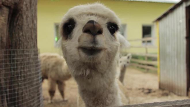 Зеленогорский зоопарк работает с нарушениями ветеринарных норм