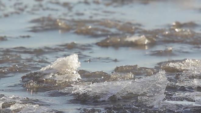 Тело утонувшей в Лахтинском разливе девочки еще не найдено