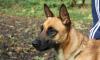 Домашняя собака загрызла 9-летнюю девочку в Ленинградской области