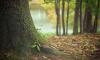 Комитет государственного экологического надзора Ленобласти провел осмотр лесного участка в Выборгском районе