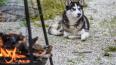 В Новой Москве женщина убила собаку на глазах у детей