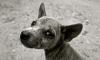 В Евпатории молодые люди жестоко избили собаку