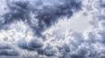 МЧС: В пятницу в Петербурге усилится ветер