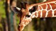 Петербург поможет обитателям Ленинградского зоопарка