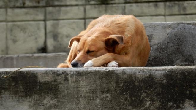 В Петербурге осенью прогнозируют наплыв бездомных собак