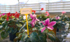 Россельхознадзор опроверг сообщения об ужесточении правил провоза фруктов и цветов в ручной клади