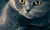 В Уфе разыскиваются живодеры, жестоко убившие кошек
