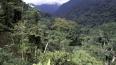 В джунглях Гондураса найдено древнее затерянное поселение ...