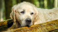 В Ленобласти 58-летний мужчина расстрелял трех собак