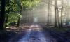 В лесу Ленобласти обнаружили труп пропавшего мужчины