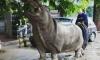 По затопленным улицам Тбилиси разгуливают волки, львы и медведи, агрессивных животных отстеливают, погибли люди