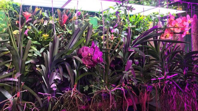 В Ленинградском зоопарке зацвела орхидея Ванда