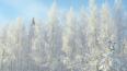 Синоптики: Предстоящая зима в Петербурге будет холоднее ...