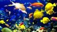 В Купчино построят новый океанариум
