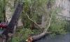 На Васильевском острове дерево упало и помяло внедорожник