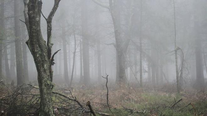 В Ленобласти официанта похитили и привязали к дереву в лесу