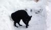Ушел, но обещал вернуться: в Петербурге снова пойдет снег