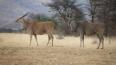 Пожилой охотник возвращается из Намибии в коме на ...