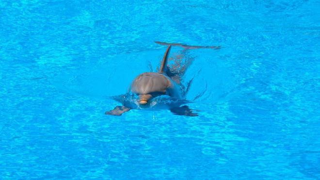 Петербургский дельфинарий вернется в город в следующем году