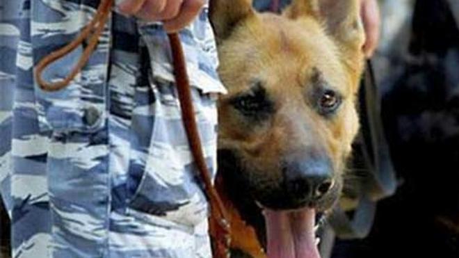 """Наркополиция """"натравила"""" на школьников собак, чтобы найти у них наркотики"""