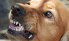 Собака укусила беременную девушку в Новой Ладоге