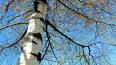 В петергофском парке обнаружили труп мужчины со следами ...