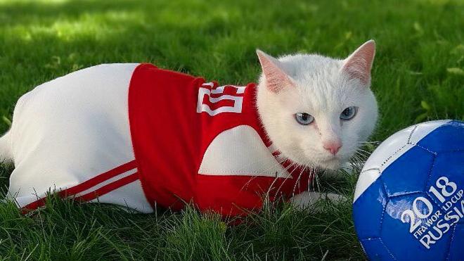 Эрмитажный кот Ахилл обзавелся семьей