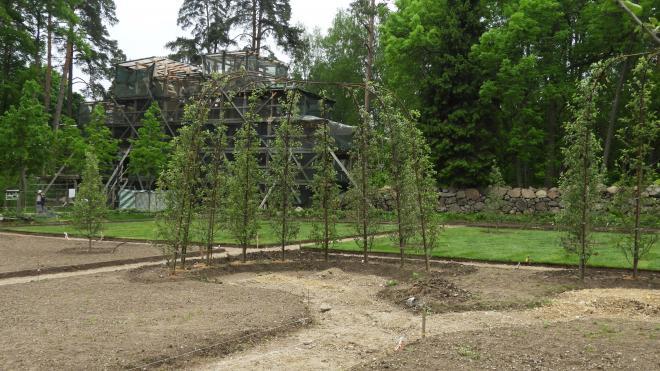 """В парке """"Монрепо"""" обустраивают топиарный сад"""