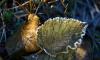 Во вторник в Ленобласти ожидается гололедица и туман