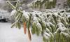 В новогоднюю ночь петербуржцев ожидают снег и небольшой мороз