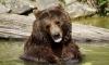 В Иркутской области суровый медведь отобрал у охотника ружья и рыбу