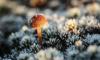 В выходные в Ленобласти температура упадет ниже нуля